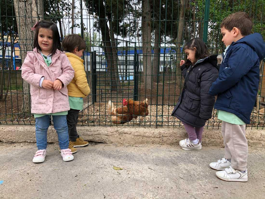 Niños de infantil con las gallinas